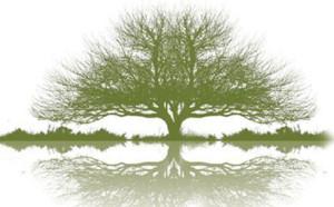 Family Tree Clothing